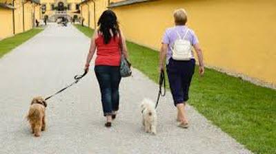 когда ходить, чтобы похудеть и сколько